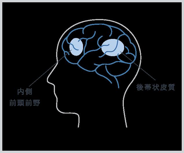 内側前頭前野 後帯状皮質