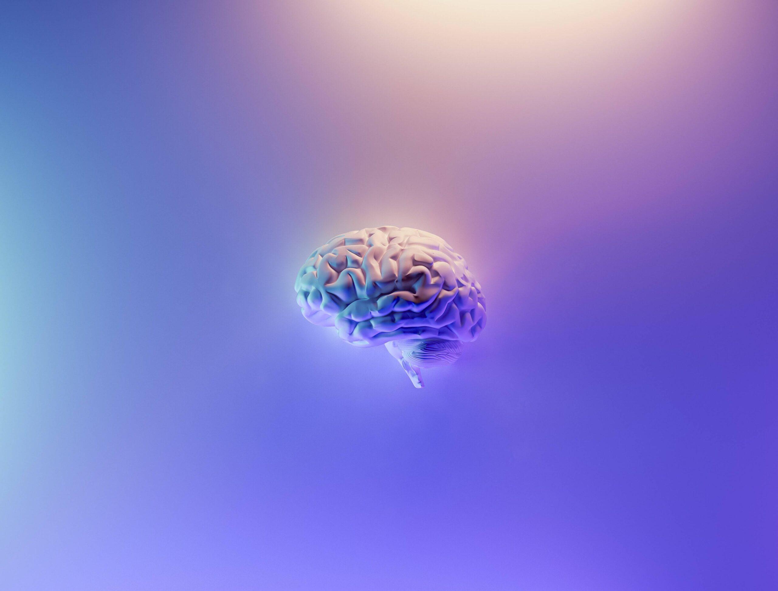 マインドフル瞑想 脳 鍛え方 扁桃体 前頭前野